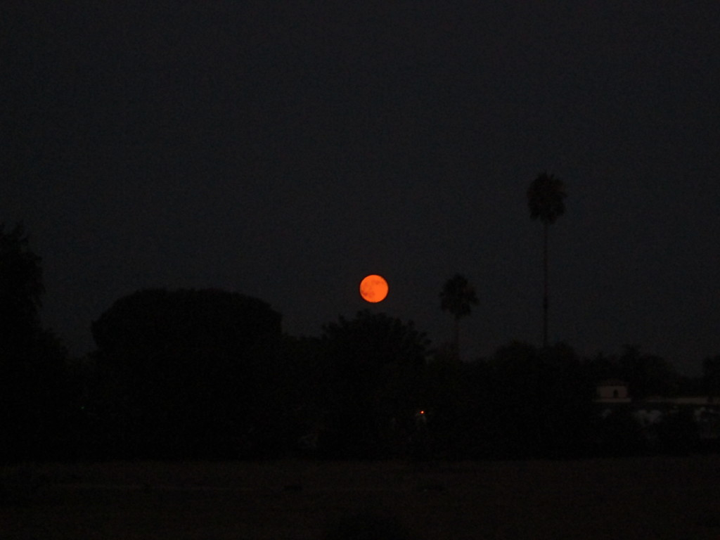 Supermoon Above The Trees