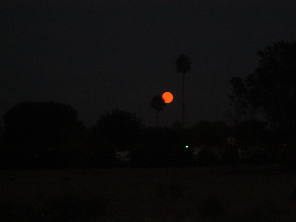 Supermoon Between The Palm Trees