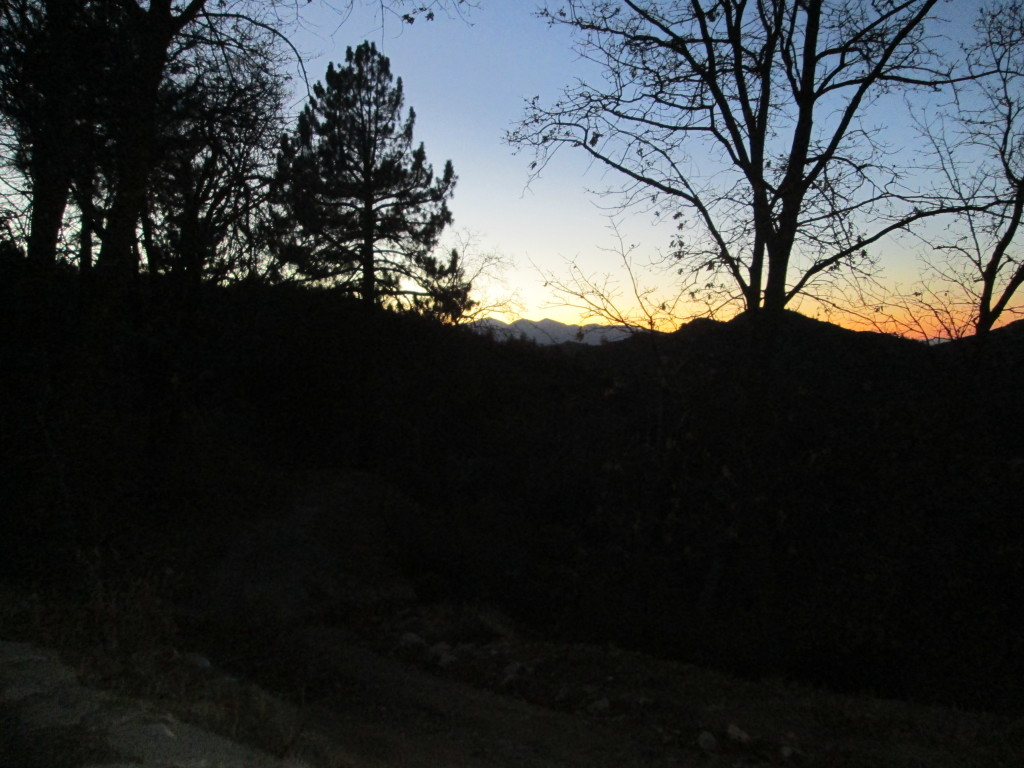 Tree silhouettes at sunset up in the San Bernardino Mountains.