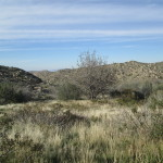 The View In The San Bernardino Mountains