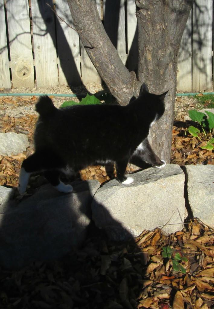 Annie Cat Walking Near A Tree