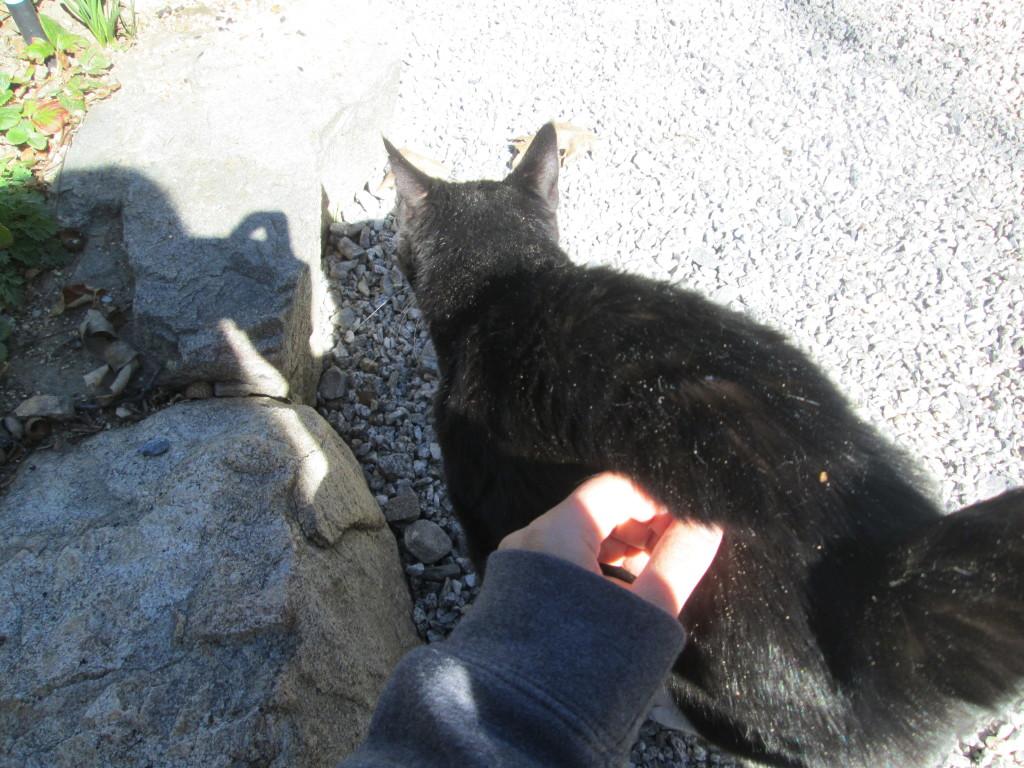 Petting Annie Cat
